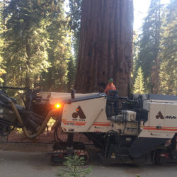 anrak truck in the redwoods